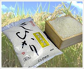 特別栽培米コシヒカリ/コシヒカリ